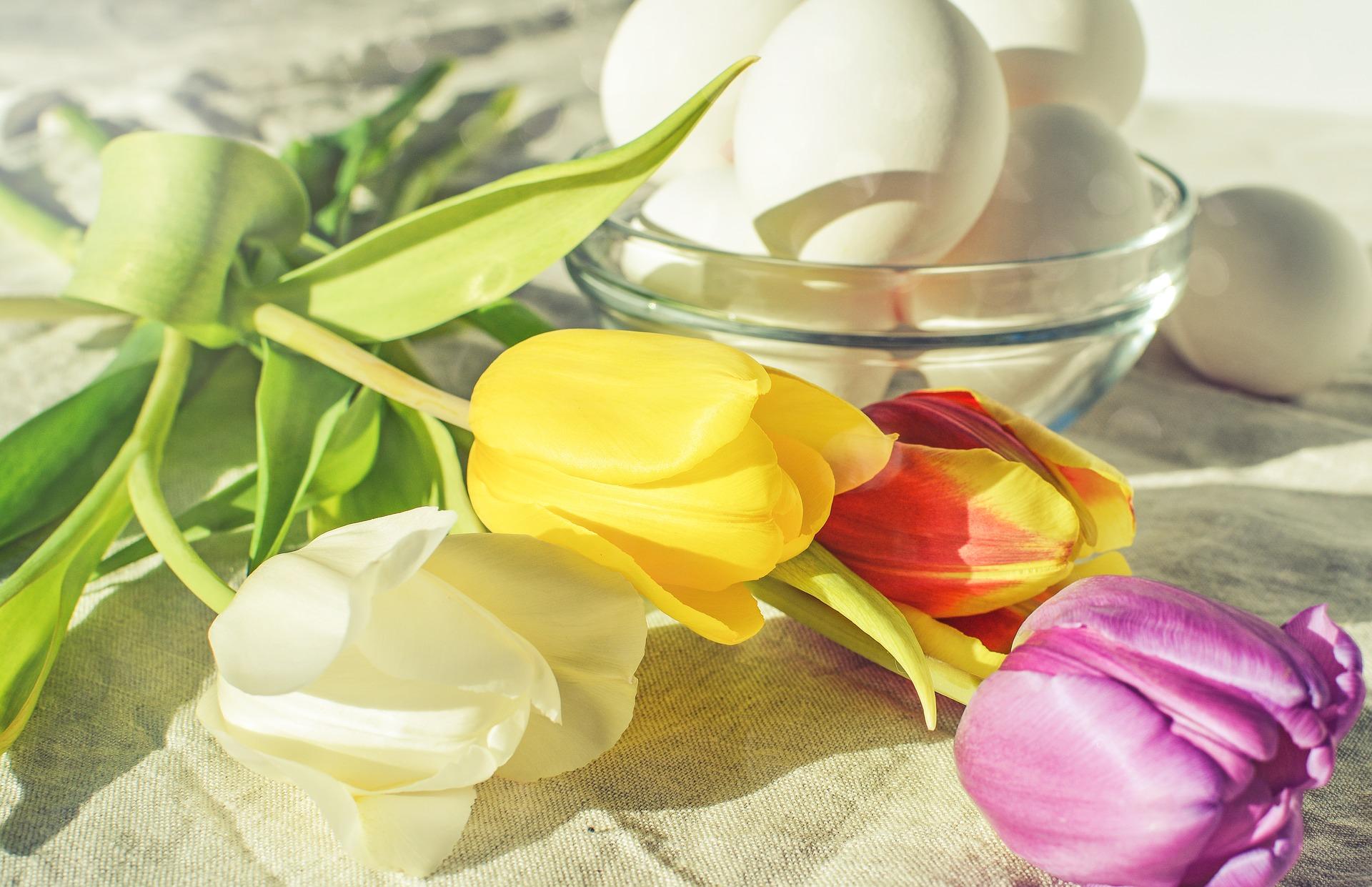 Tulipaner og hvite egg i solglans